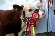 Pembrokeshire County Show moves into final day