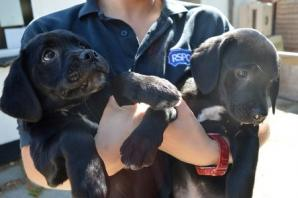 Fresh start for illegally imported puppies